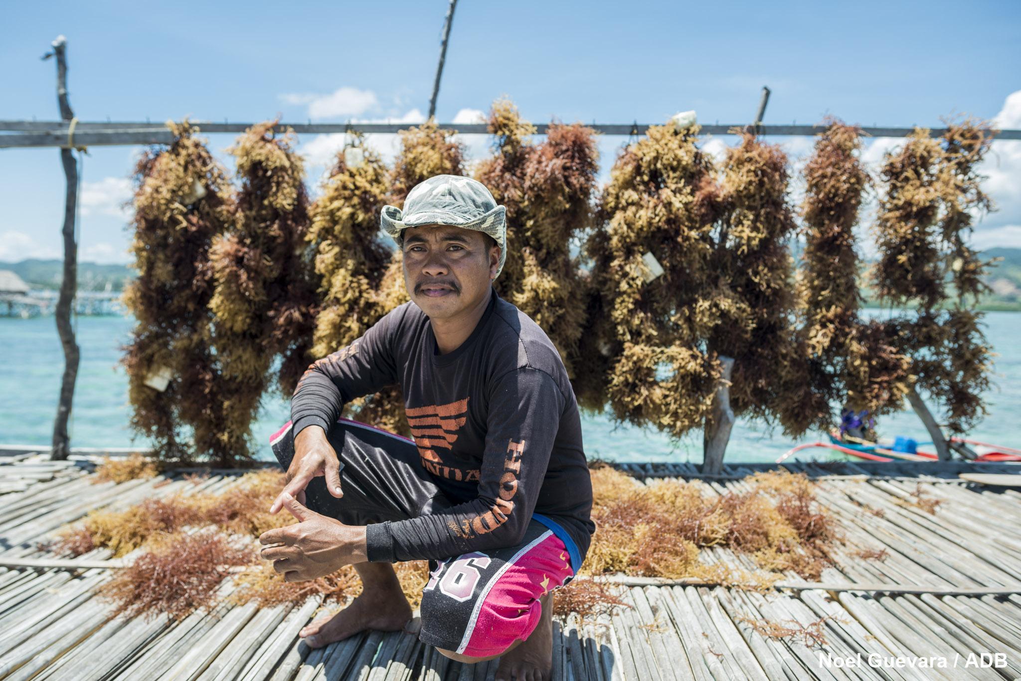 seaweed farming in taytay
